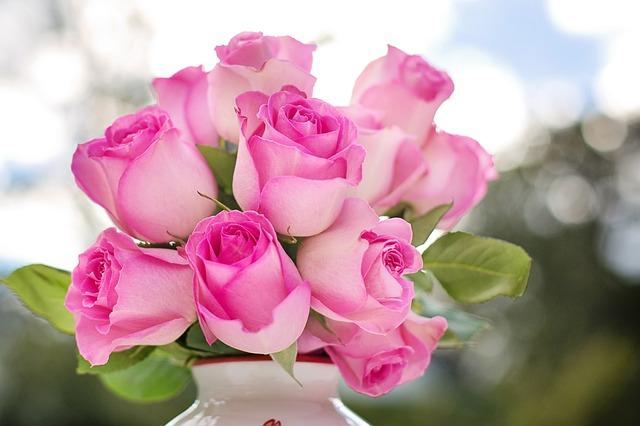 kytice růžových růží