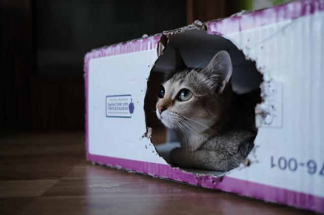 kočka v kartonové krabici